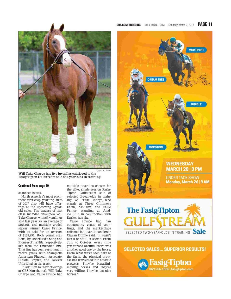 News - About our Thoroughbred HorsesBG Thoroughbred Farms